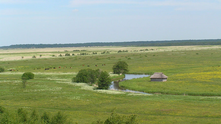 Estonian landscape: alluvial meadow in the National Park of Matsalu, by Merike Linnamägi