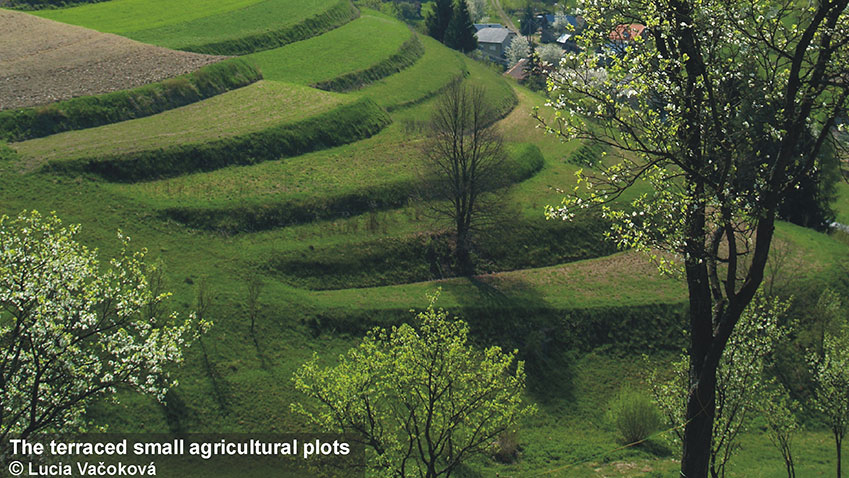 The-terraced-small-agricultural-plots.jpg