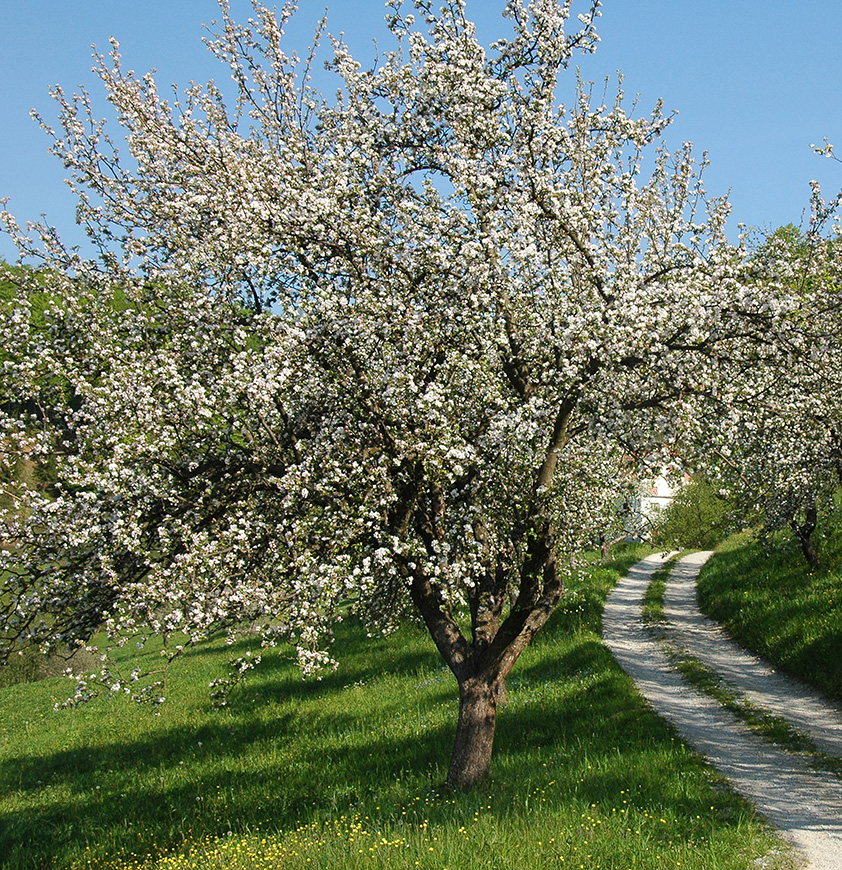 SLOVENIA - Meadow orchards, Kozje _ Photo (2)_jpg.jpg